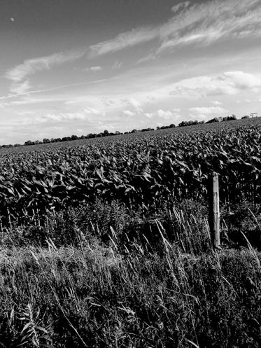 1. BW - Cornfields, Sky - Innisfil, Ontario, Canada July 2014. (SM CADMAN)