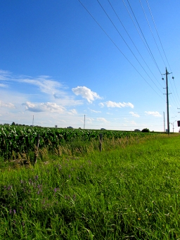 13. C- Sky, Cornfields, Telephone Pole, Innisfil, Ontario, Canada July 2014. (SM CADMAN)