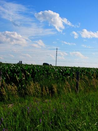 15. C - Cornfields, Sky - Innisfil, Ontario, Canada July 2014. (SM CADMAN)