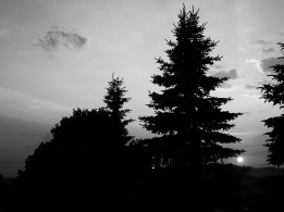 25. BW - Sunset, Tall Pine Trees - Barrie, Ontario, Canada July 2014. (SM CADMAN)