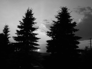 26. BW - Sunset, Tall Pine Trees - Barrie, Ontario, Canada July 2014. (SM CADMAN)