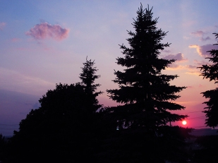 34. C - Sunset, Tall Pine Trees - Barrie, Ontario, Canada July 2014. (SM CADMAN)
