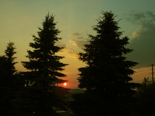 35. C - Sunset, Tall Pine Trees - Barrie, Ontario, Canada July 2014. (SM CADMAN)
