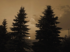 36. T- Sunset, Tall Pine Trees - Barrie, Ontario, Canada July 2014. (SM CADMAN)