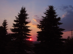 37. C - Sunset, Tall Pine Trees - Barrie, Ontario, Canada July 2014. (SM CADMAN)