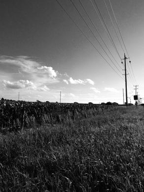 38. BW - Cornfields, Telephone Pole - Innisfil, Ontario, Canada July 2014. (SM CADMAN)