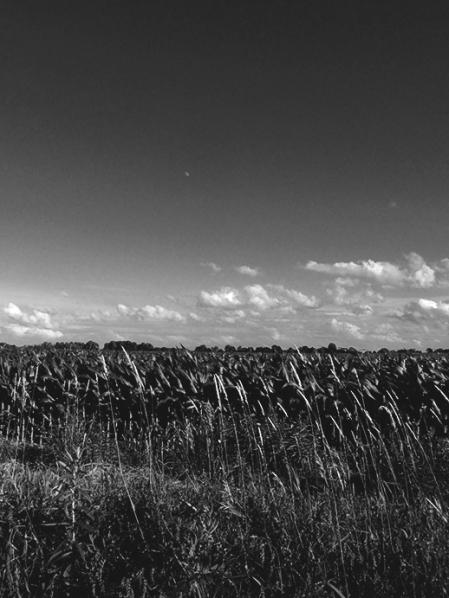 8. BW - Cornfields, Sky - Innisfil, Ontario, Canada July 2014. (SM CADMAN)