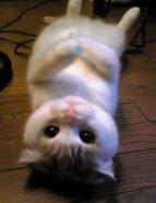 cute-cat-11