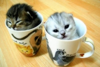 Cute-cats-cups-large-msg-128926455737
