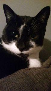 Max the Quarter Cat @QuarterCatMax https://twitter.com/quartercatmax