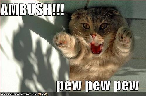 ambush-cat