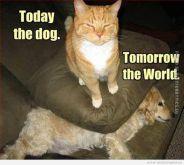 funny-cat-quotes