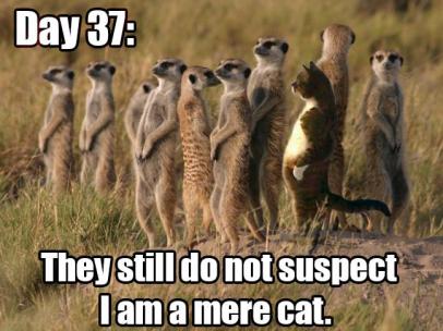 mere-cat